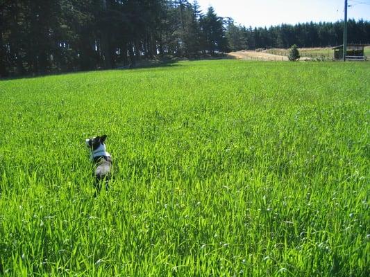 Six Best Dog Breeds for a Small Backyard Farm | PetHelpful |Small Dogs Farm