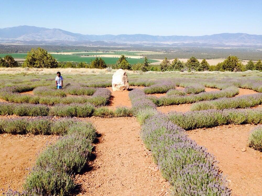 Mt Shasta Lavender Farms - 45 Photos & 10 Reviews - Botanical
