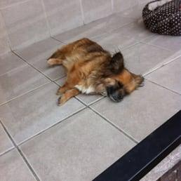 Doggie style on floor