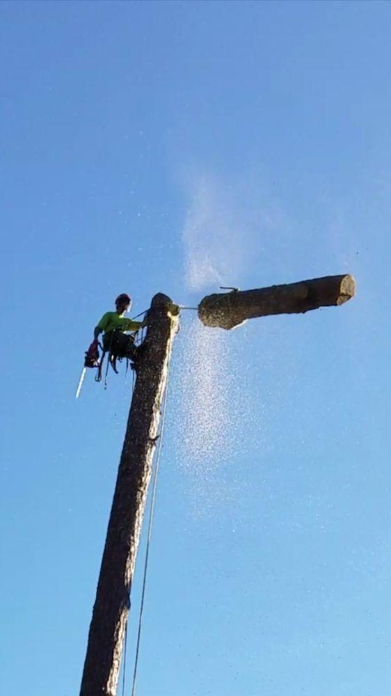 Carefree Tree Care: Gold Run, CA