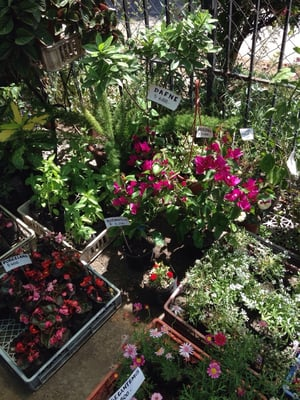 Jardin verde huerto viveros y jardiner a hugo ercilla for Viveros en maipu
