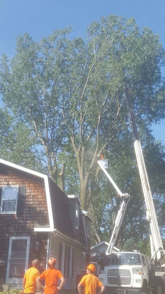 Leopold's Tree Trimming & Removal: 1359 Marshall Dr, Erie, PA