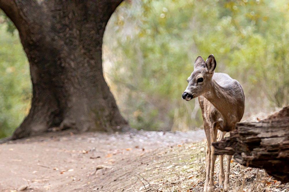 Rancho San Antonio Preserve: 22500 Cristo Rey Dr, Los Altos, CA