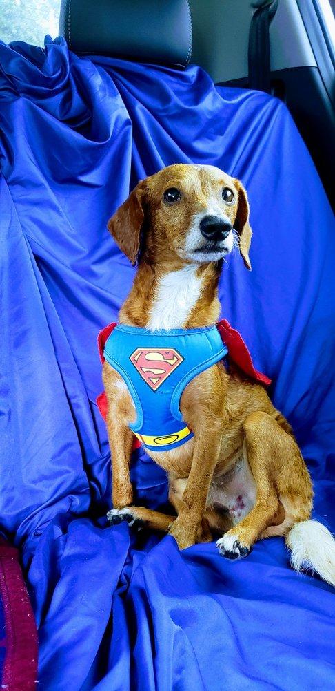 Moller's Animal Health Center: 131 Webb Dr, Davenport, FL