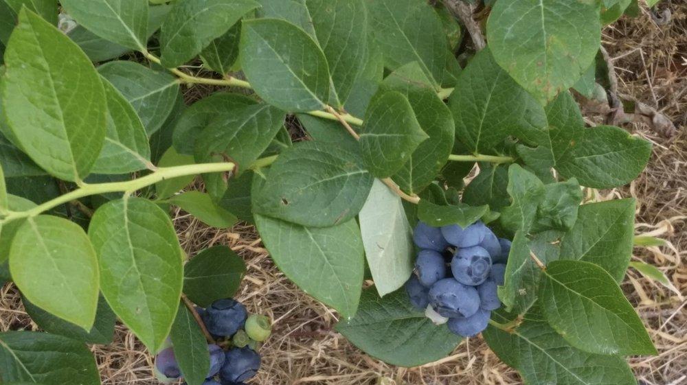 Murphy Orchard