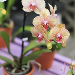 Photo Of Orchids Garden Centre U0026 Nursery   Waunakee, WI, United States. This