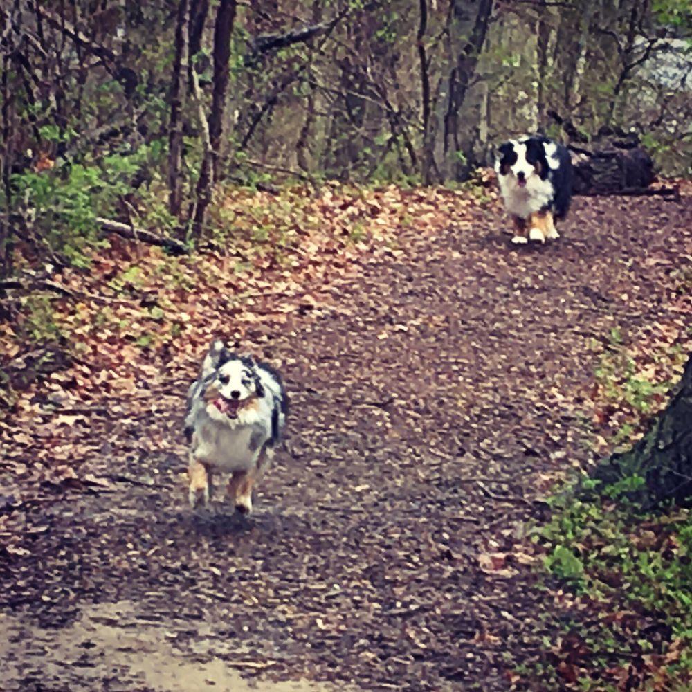 Tails n' Trails: Pawtucket, RI