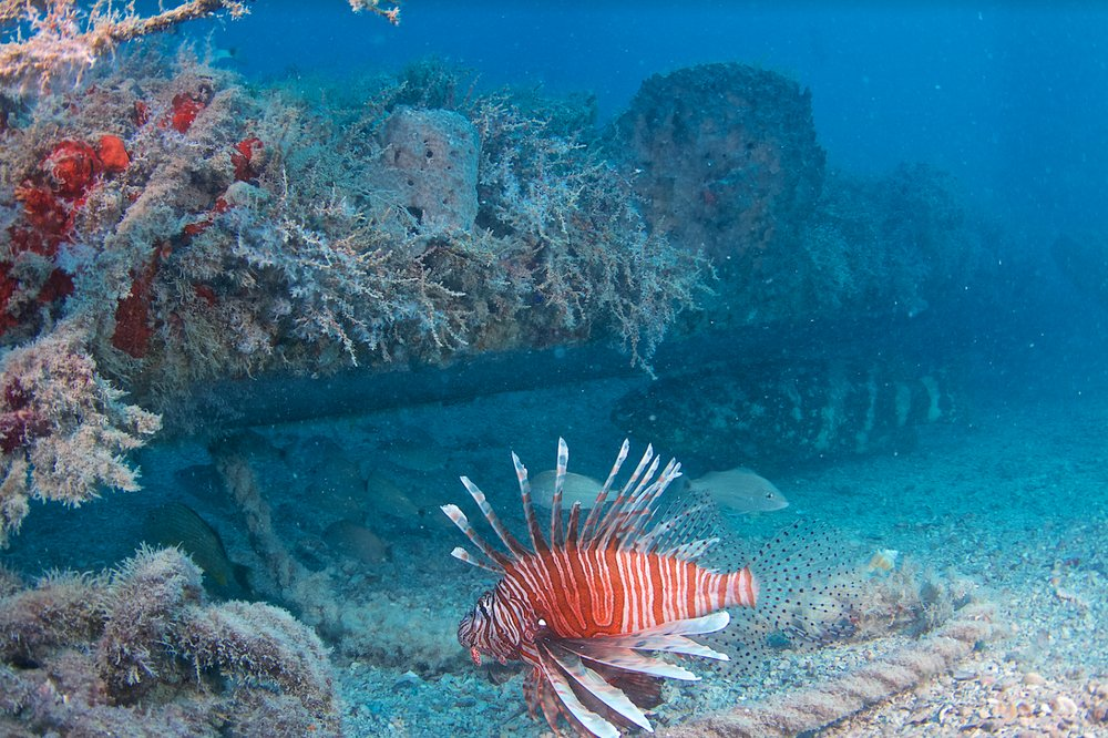 Finz Dive Center: 5130 Overseas Hwy, Key West, FL