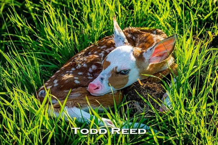 Todd & Brad Reed Photography: 114 W Ludington Ave, Ludington, MI