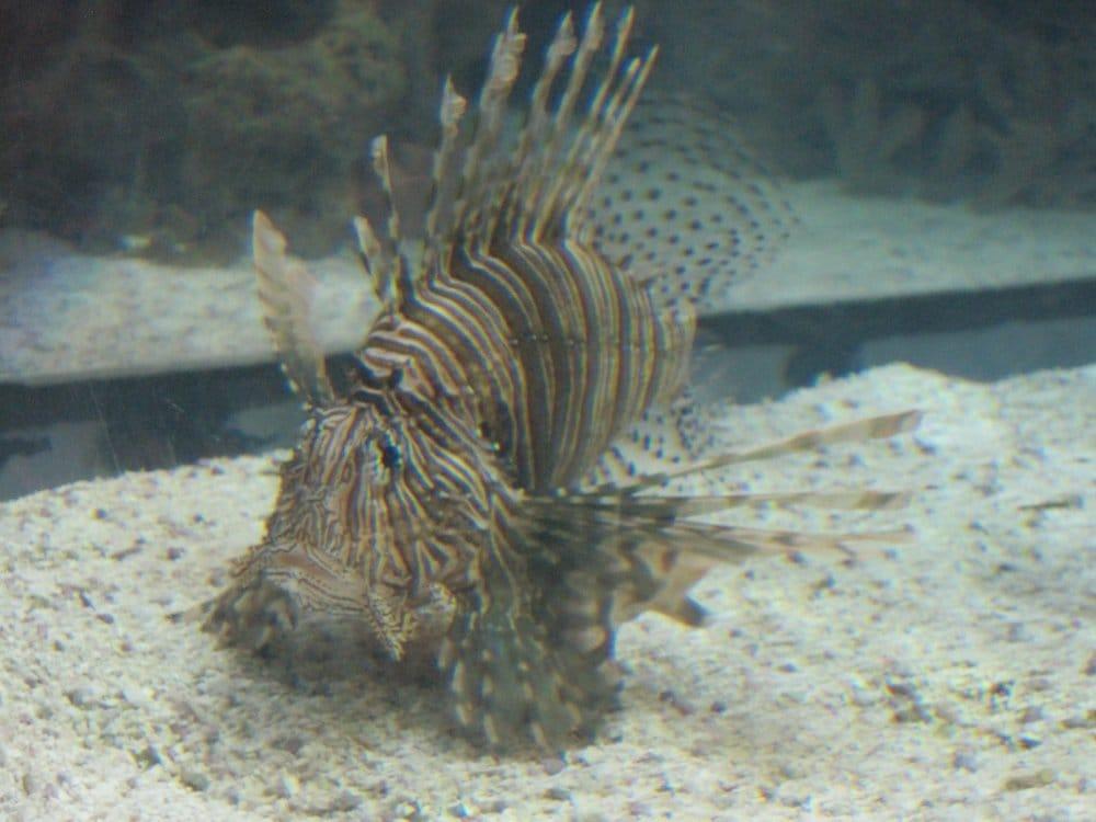 Creepy fish haha yelp for Kumak s fish