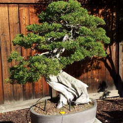 Bonsai Garden at Lake Merritt 135 Photos 24 Reviews
