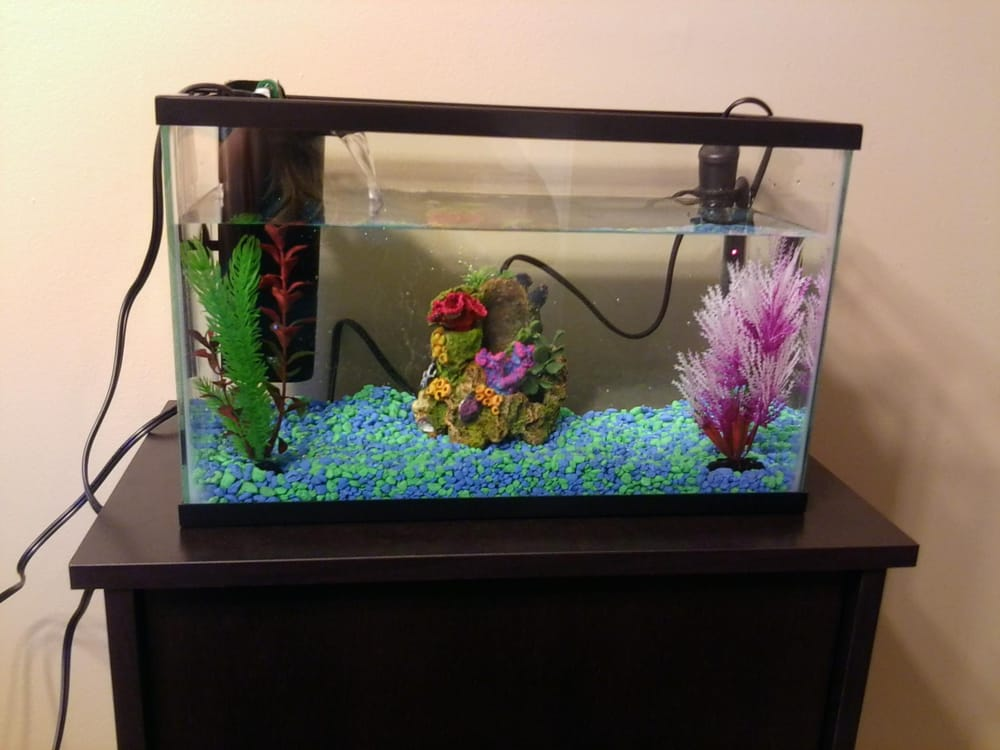 Our Fish Tank Stand Filter And Decor For Our Baby Guppies Yelp