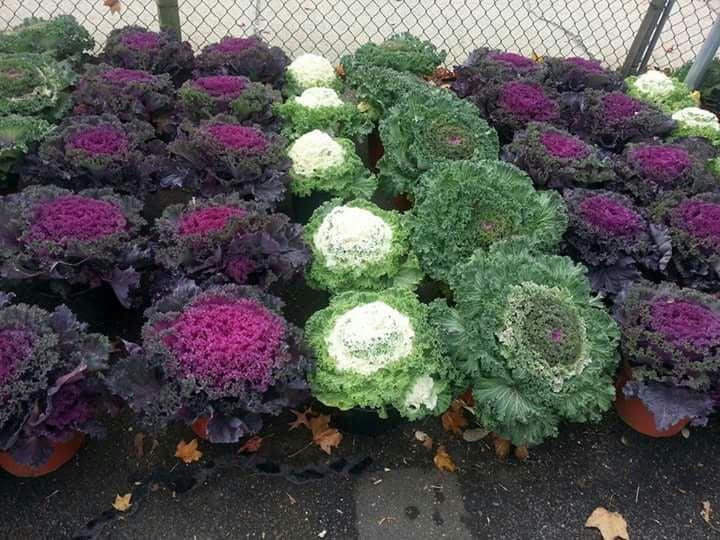 Abby's Parkside Nursery & Florist inc: 3333 Merrick Rd, Wantagh, NY