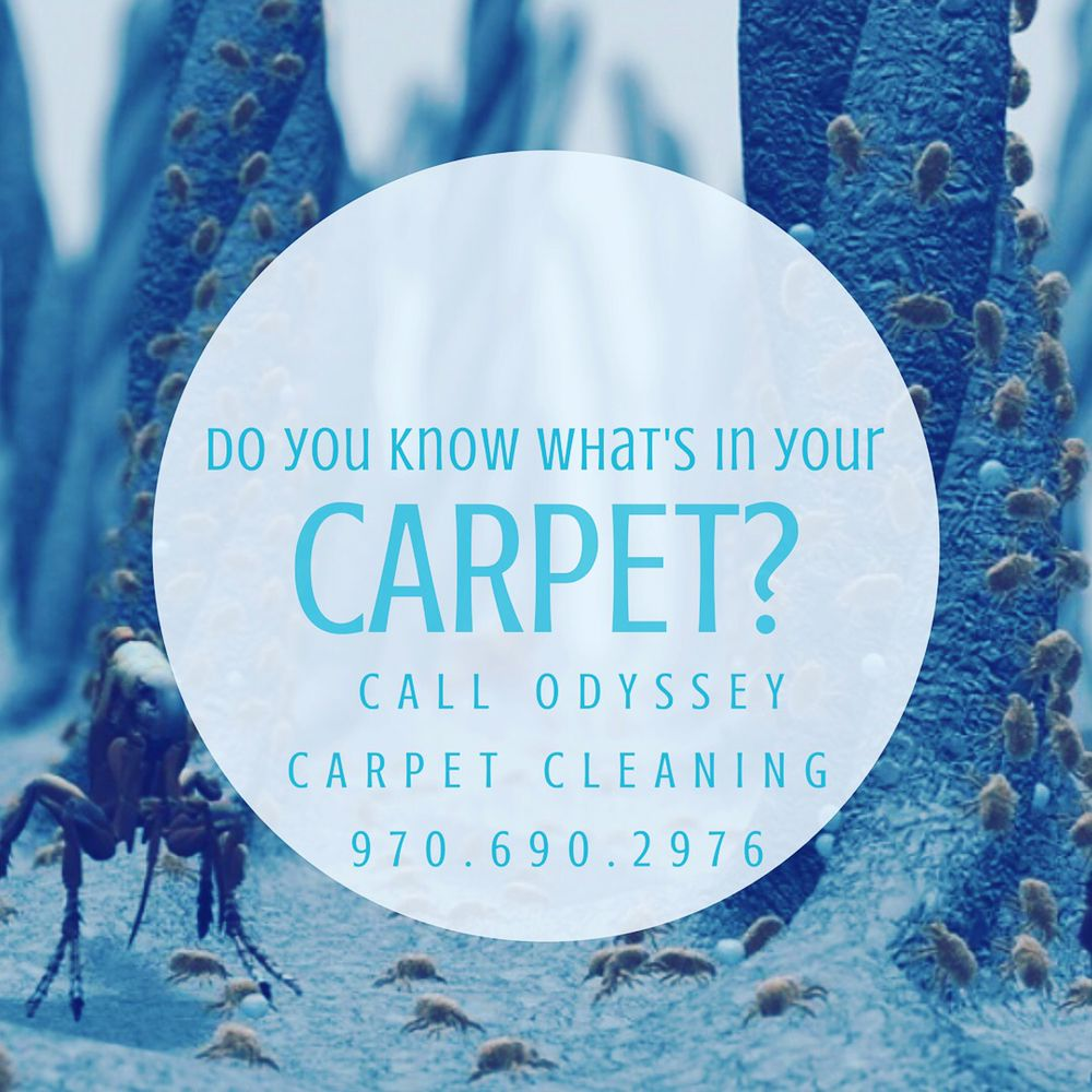 Odyssey Carpet Cleaning: 570 10th St, Windsor, CO