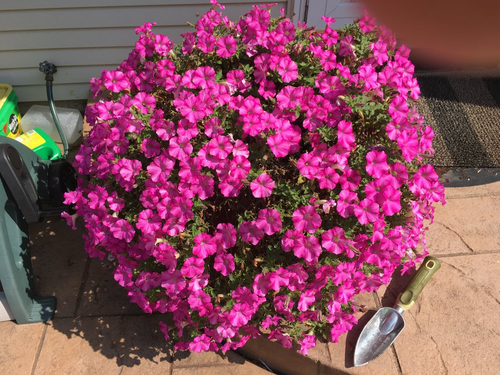 CJ's Flowers: 3205 W 3 Mile Rd, Franksville, WI