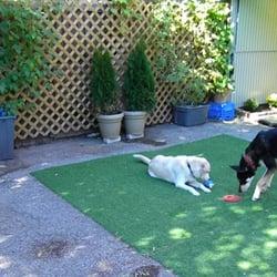 Woof Dog Grooming Toronto