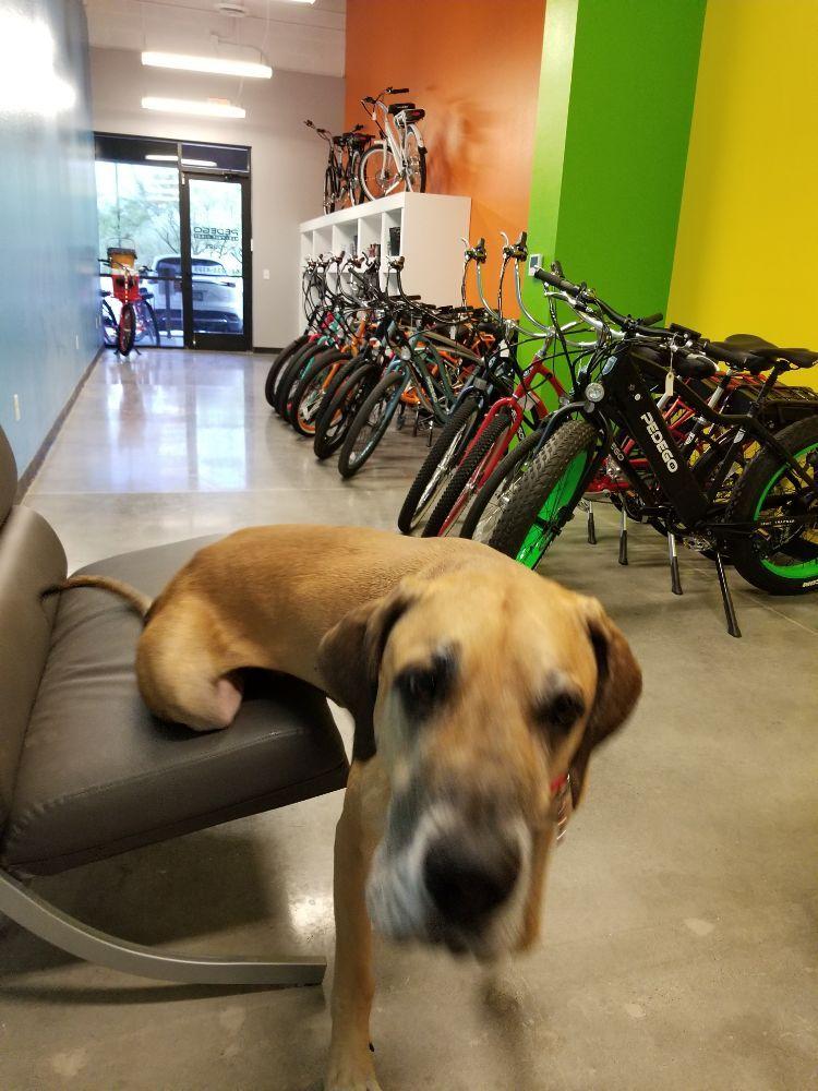 Pedego Electric Bikes Glendale