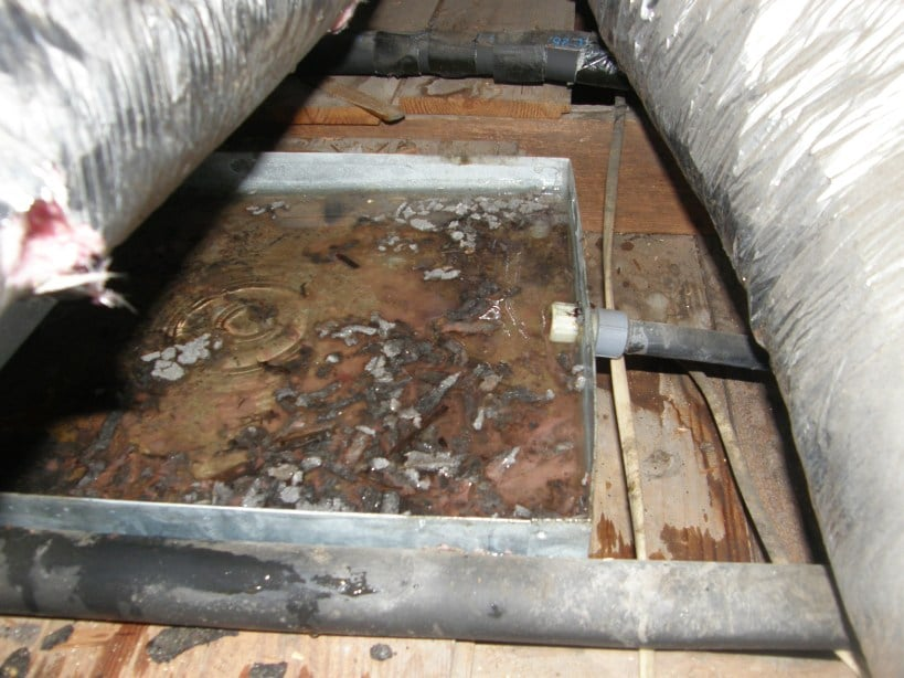 Mold Bacteria In A Condensate Pan On An Air Handler Yelp