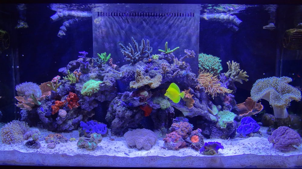 Reef Creations 10 Reviews Aquarium Services 7723