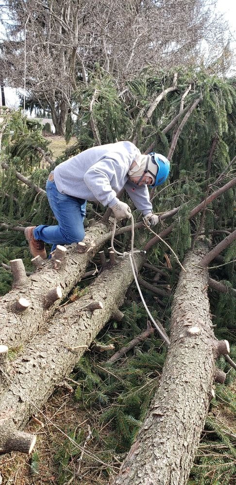 Photo of Allstar Arbor Tree Service: Pittsburgh, PA