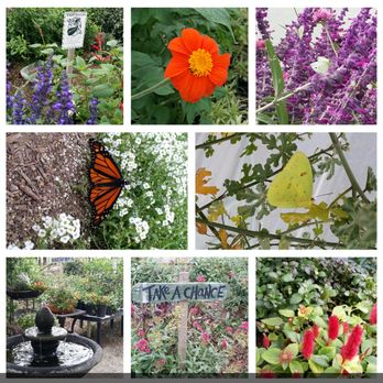 Etonnant Photo Of Butterfly Farms   Encinitas, CA, United States