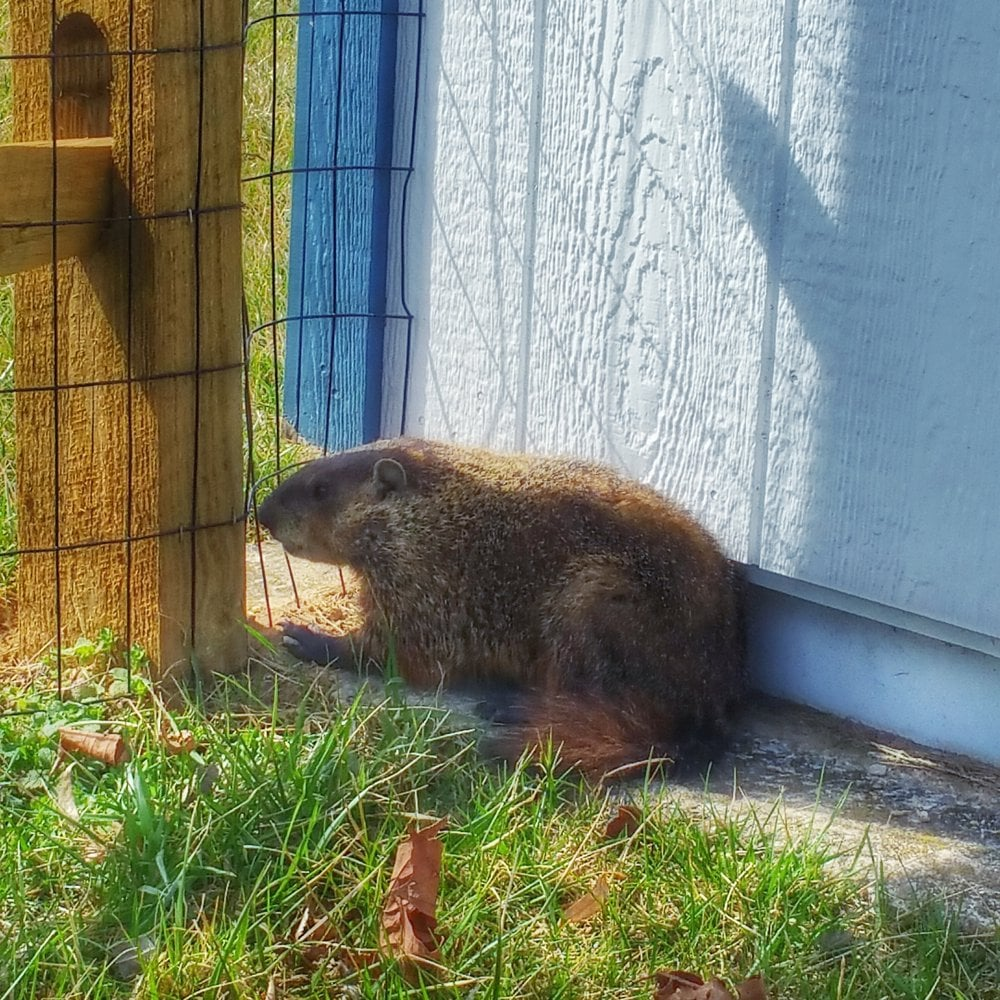 Trapper Bob's Wildlife Control Removal: Clear Spring, MD