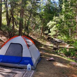 Pine Knot Campground - 79 Photos & 97 Reviews - Campgrounds