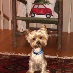 PetSmart - 23 Reviews - Pet Training - 550 Amherst, Nashua, NH