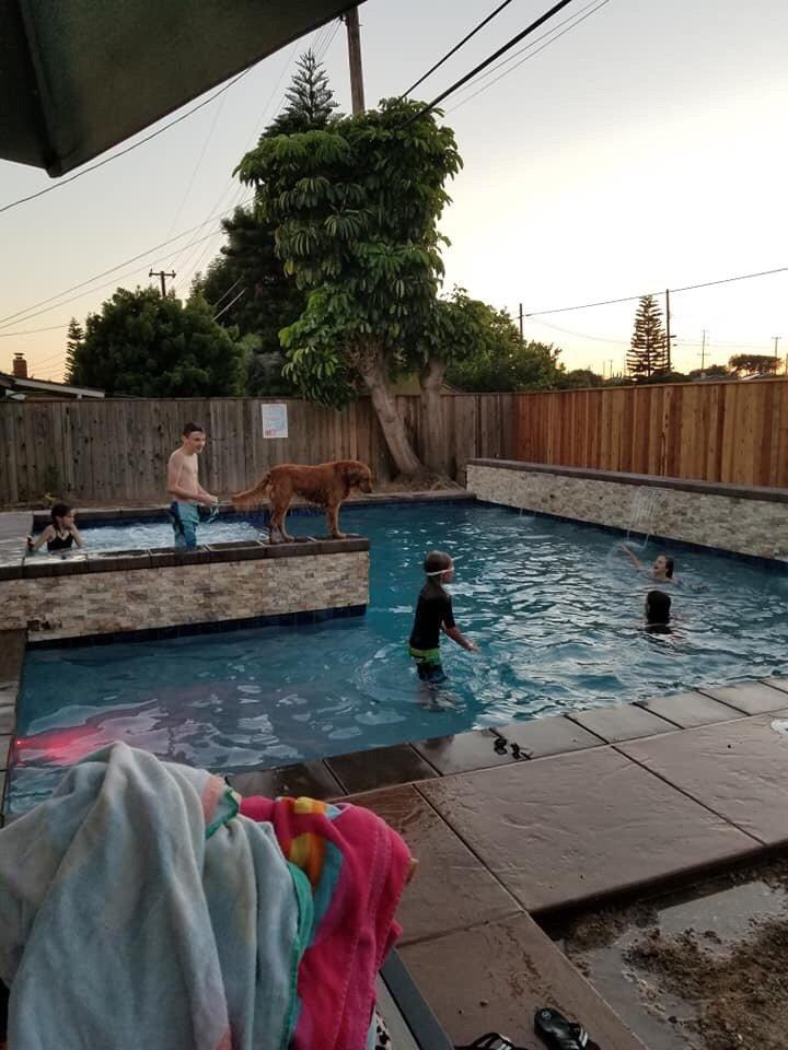 Blue Fountain Pools - 53 Photos & 63 Reviews - Pool & Hot