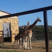 Natural Bridge Wildlife Ranch 890 Photos Amp 301 Reviews
