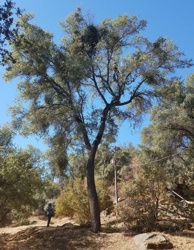 Goodman & Cole Tree Service: 5901 Colorado Rd, Mariposa, CA