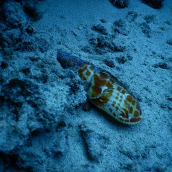 54abfab4eb29c1 Island Divers Hawaii - 134 Photos   275 Reviews - Scuba Diving - 377 ...