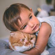 Scottish Fold Kittens - (New) 109 Photos - Pet Breeders - 139 Bay