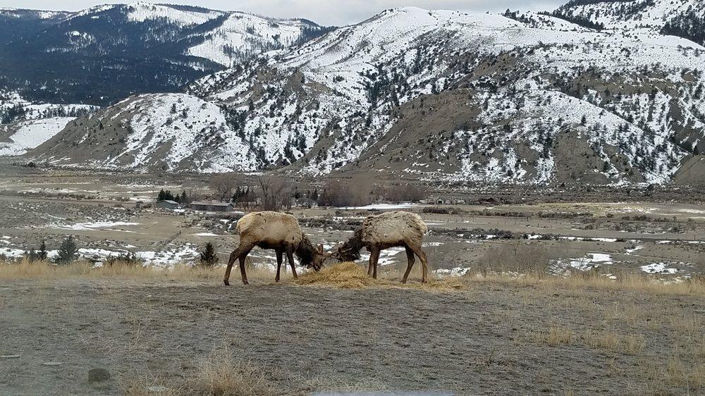 Yellowstone Basin Inn: 4 Maiden Basin Dr, Gardiner, MT