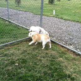 Cranberry Dog Park Pa