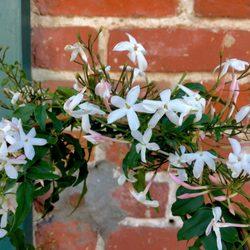 Fiori - 28 Photos & 31 Reviews - Florists - 1406 Burlingame Ave ...