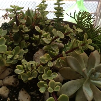 Great Photo Of Botanica Garden Center   Brooklyn, NY, United States. Made This  Arrangement