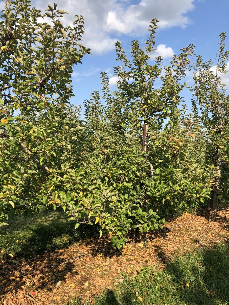 Melick Orchards: 472 County Rd 513, Califon, NJ
