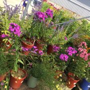 Photo Of Peti Garden Center Bedford Oh United States