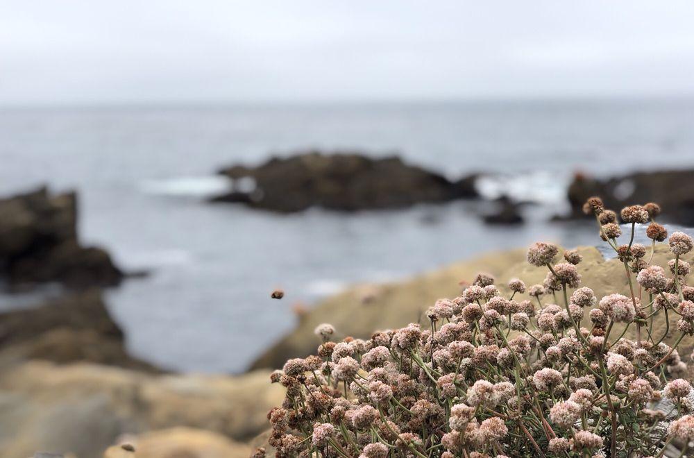 Point Lobos State Natural Reserve: 62 CA-1, Carmel, CA