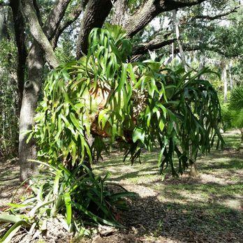 Florida Tech Botanical Garden - 17 Photos - Botanical Gardens - 150 ...