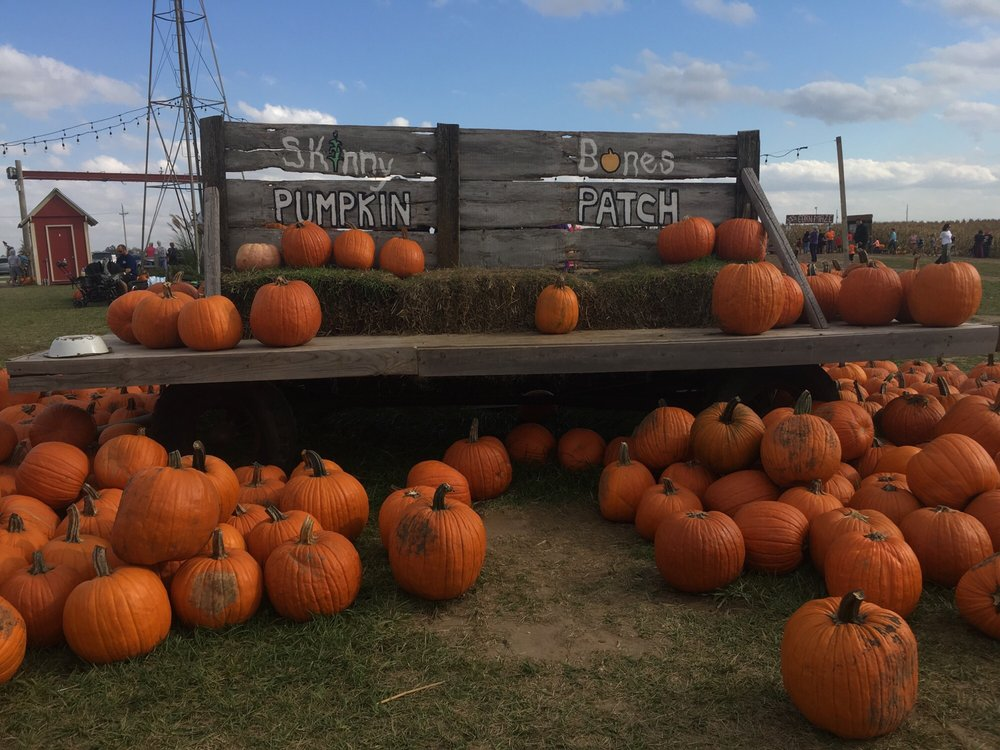 Skinny Bones Pumpkin Patch: 3935 Hwy 133, Blair, NE