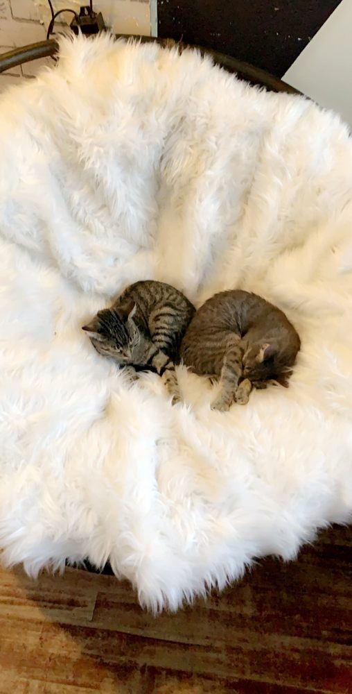 Photo of Crumbs & Whiskers | A Cat Cafe Experience.: Washington, DC, DC