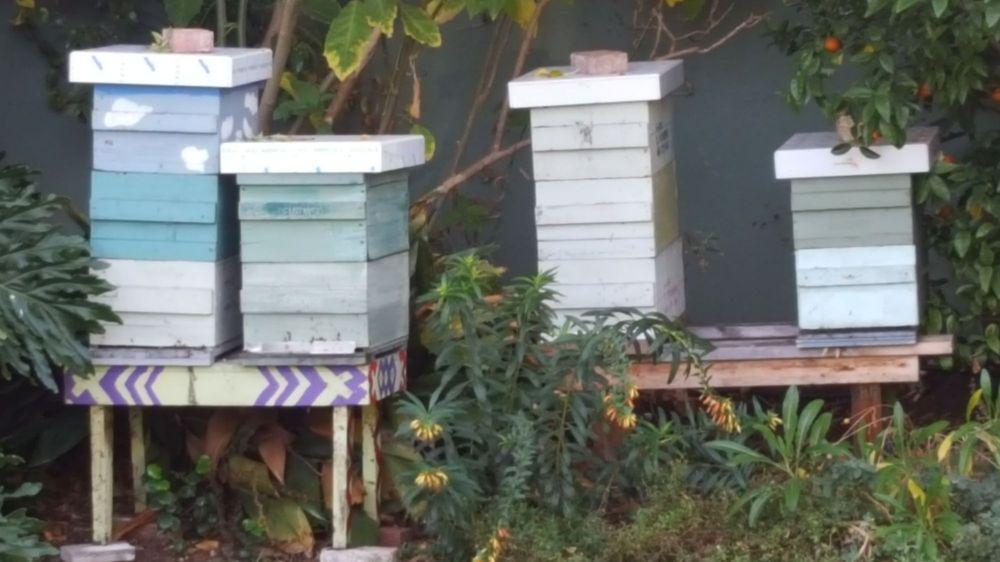 Willow Glen Honey: 1393 Lincoln Ave, Willow Glen, CA