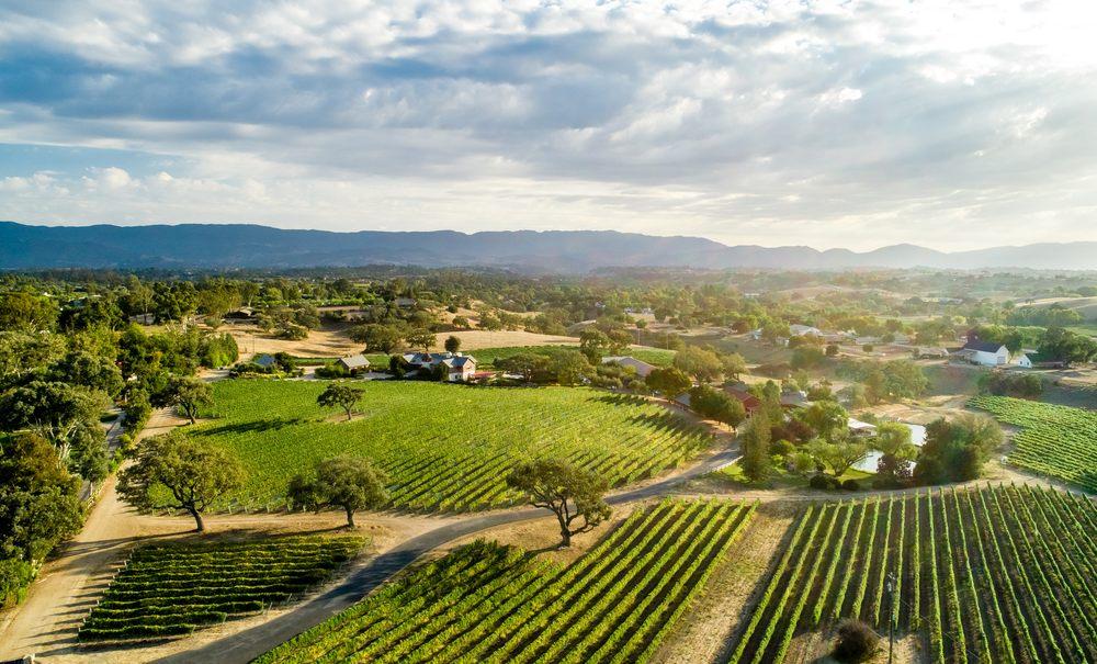 Beckmen Vineyards: 2670 Ontiveros Rd, Los Olivos, CA