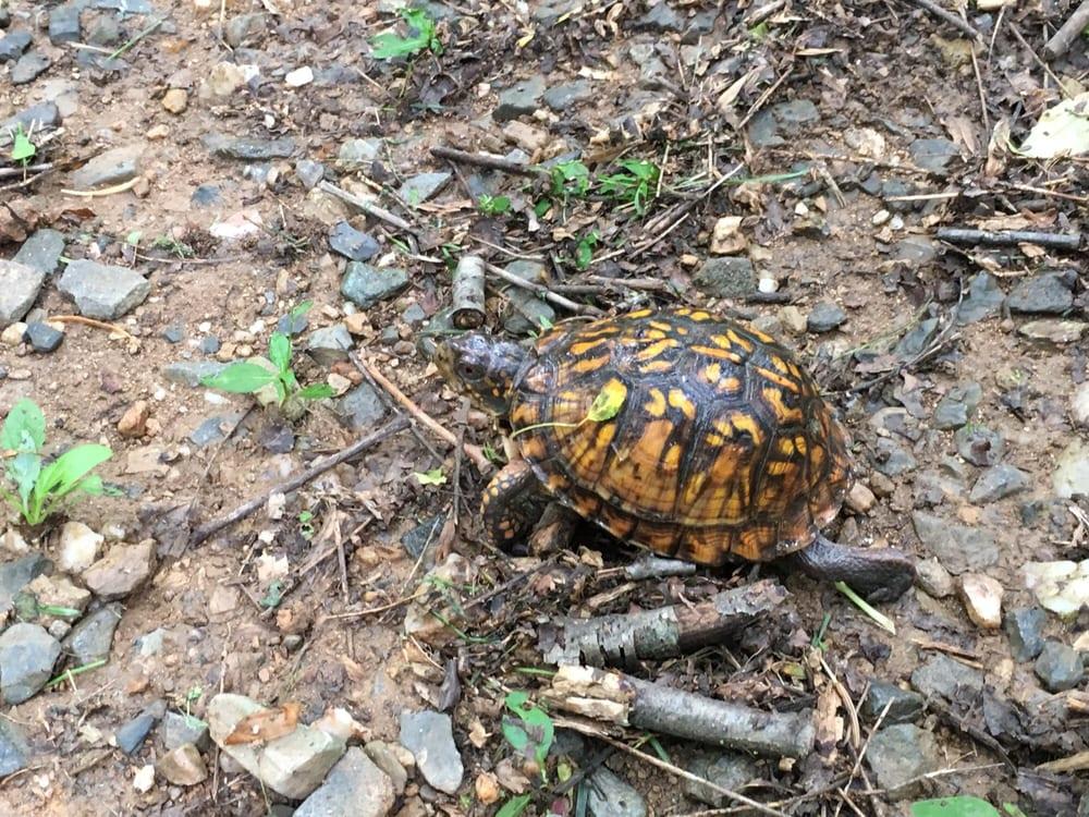 Little Bennett Regional Park: 23701 Frederick Rd, Clarksburg, MD
