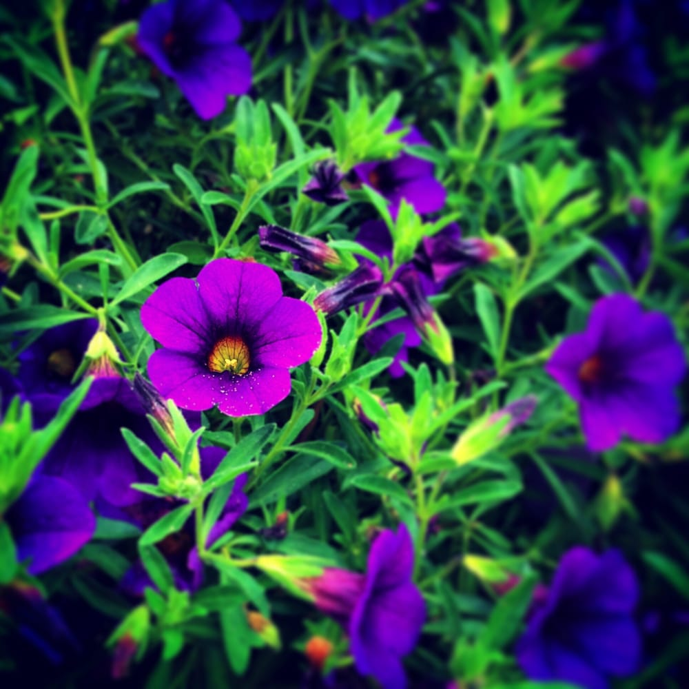 Steiger's Lawn Care: 115 E Orchid Rd, Wildwood Crest, NJ