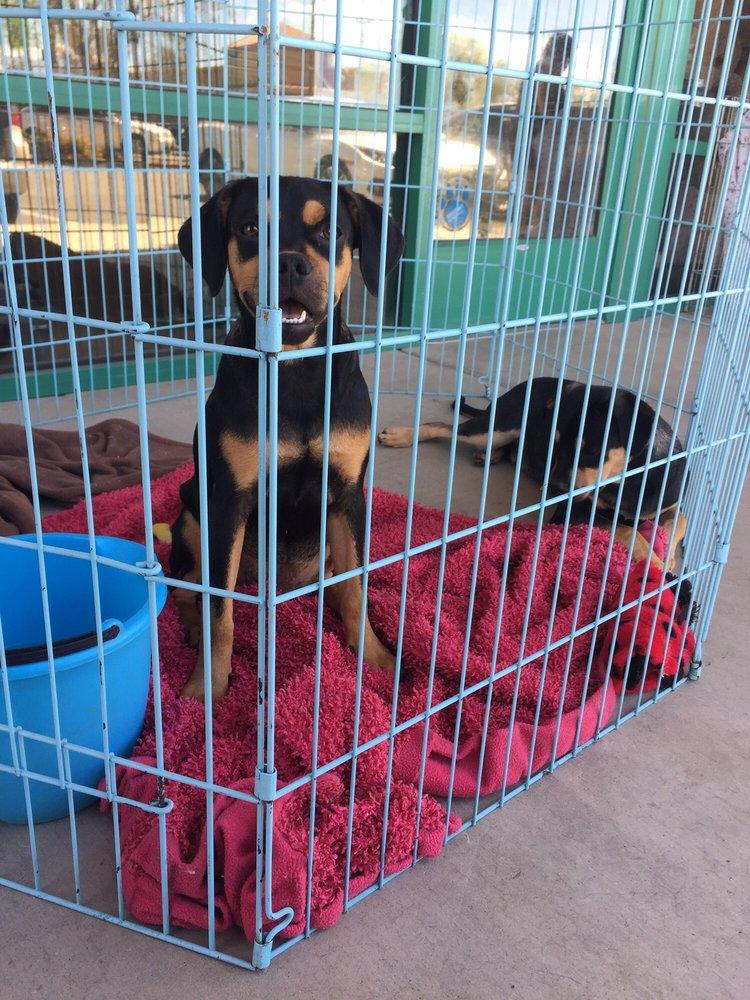 Pet Oasis: 42220 Washington St, Bermuda Dunes, CA