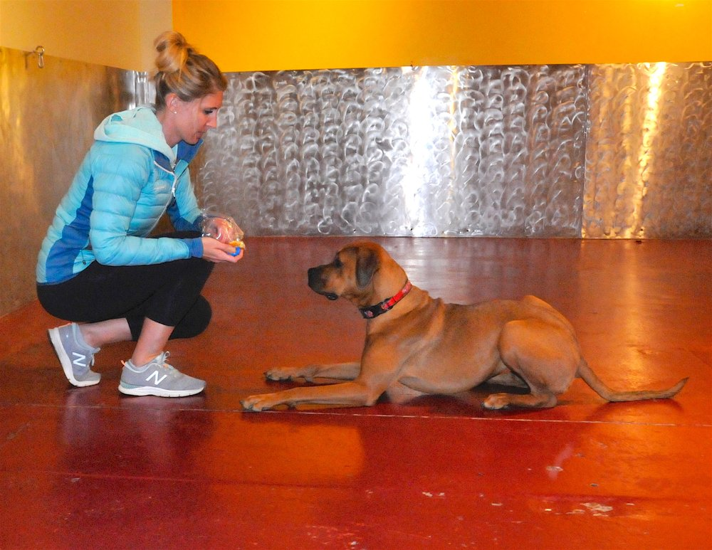 Ohana Canine Training: 115 Wilcox St, Castle Rock, CO