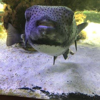 South Florida Science Center and Aquarium - 261 Photos & 91